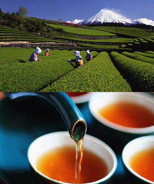 Weaver's Tea - Tea fields in Japan