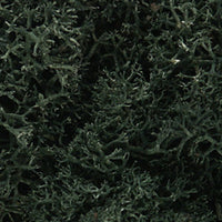 Woodland Scenics L164 48oz Dark Green Lichen