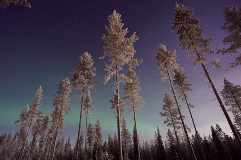 The Northern Lights is a must-see!