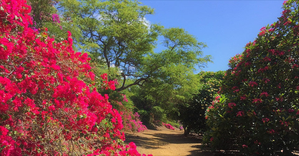 Koko Crater Botanical Garden Is A 2 Mile Looped Trail, Located On The Inner  Slopes And Basin Of The 200 Acre Koko Head Crater. The Trail Path Is  Flanked By ...