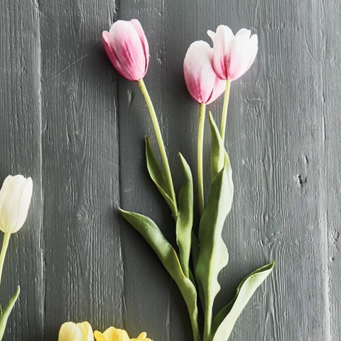 Image of French Tulips Bundle 24""