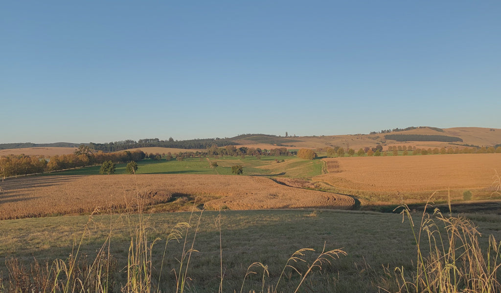 karkloof valley grass picture