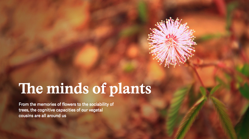 The Minds of Plants
