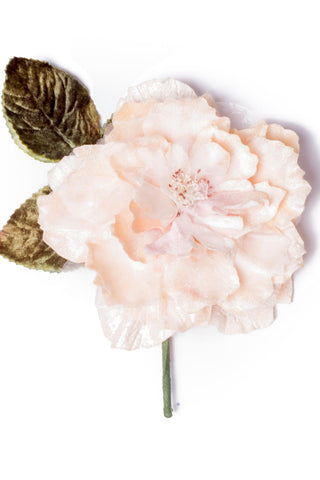 Cabbage Rose Champagne