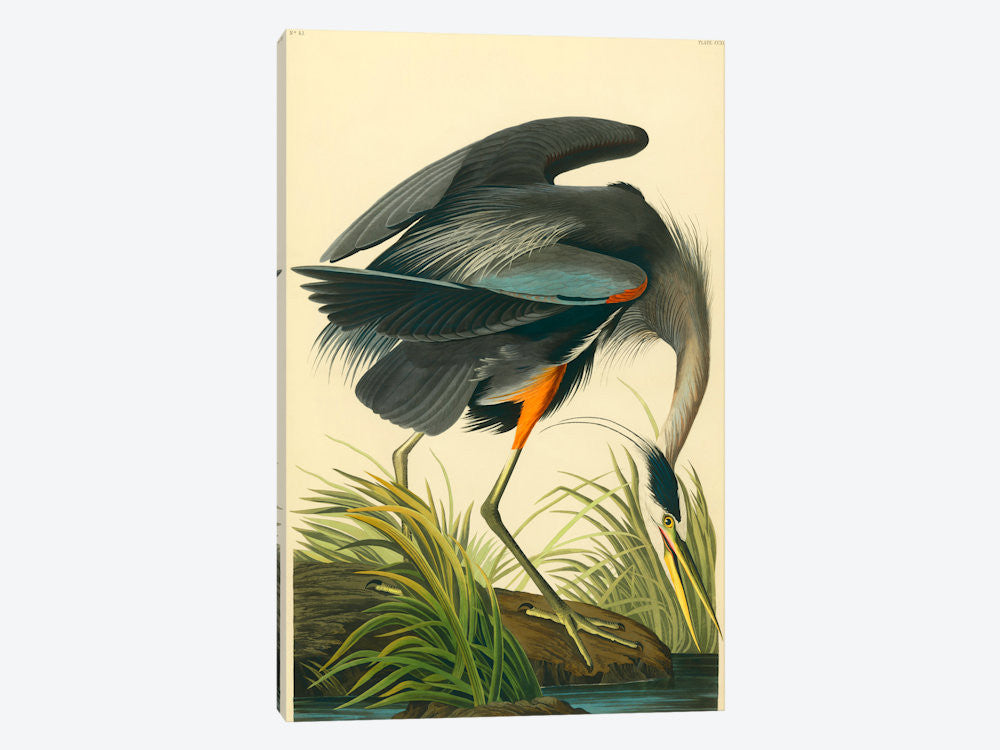 "Great Blue Heron by John James Audubon Canvas Print 18"" L x 26"" H x 0.75"" D - eWallArt"