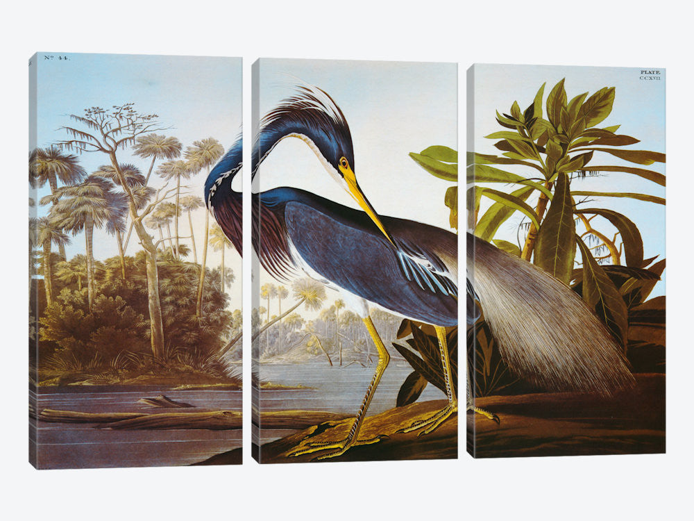"Louisiana Heron From ""Birds of America"" by John James Audubon Canvas Print 60"" L x 40"" H x 0.75"" D - eWallArt"