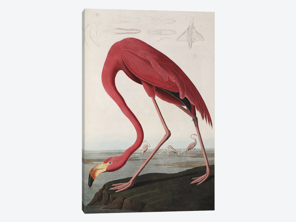 "Flamingo Drinking At Water's Edge by John James Audubon Canvas Print 18"" L x 26"" H x 0.75"" D - eWallArt"