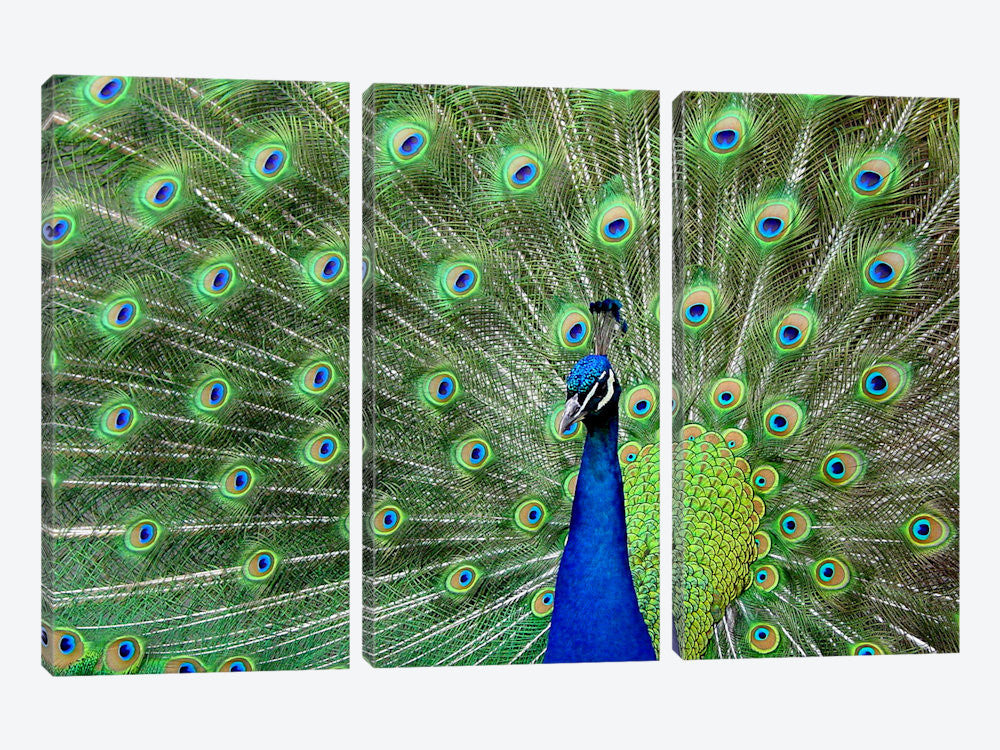"Peacock Feathers Canvas Print 60"" L x 40"" H x 0.75"" D - eWallArt"