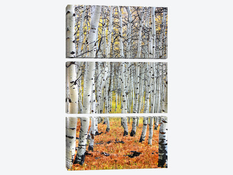 "Autumn In Aspen Canvas Print 26"" L x 40"" H x 0.75"" D"