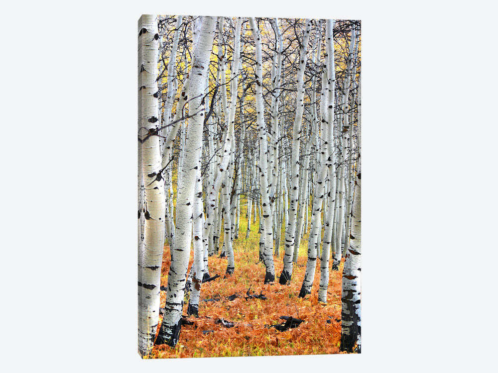 "Autumn In Aspen Canvas Print 40"" L x 60"" H x 1.5"" D - eWallArt"