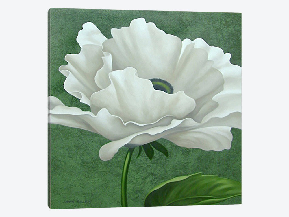 "White Poppy by John Zaccheo Canvas Print 37"" L x 37"" H x 0.75"" D - eWallArt"