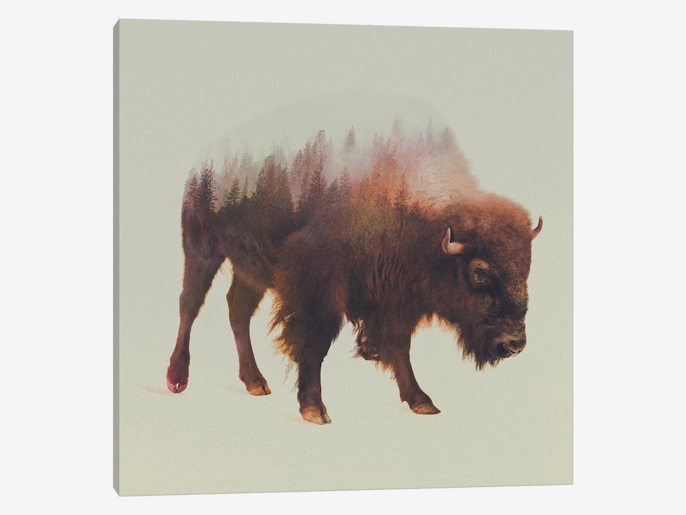 "Bison I by Andreas Lie Canvas Print 26"" L x 26"" H x 0.75"" D - eWallArt"