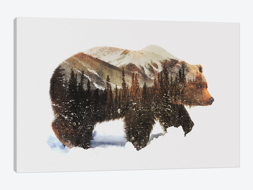 "Arctic Grizzly Bear by Andreas Lie Canvas Print 26"" L x 18"" H x 0.75"" D - eWallArt"
