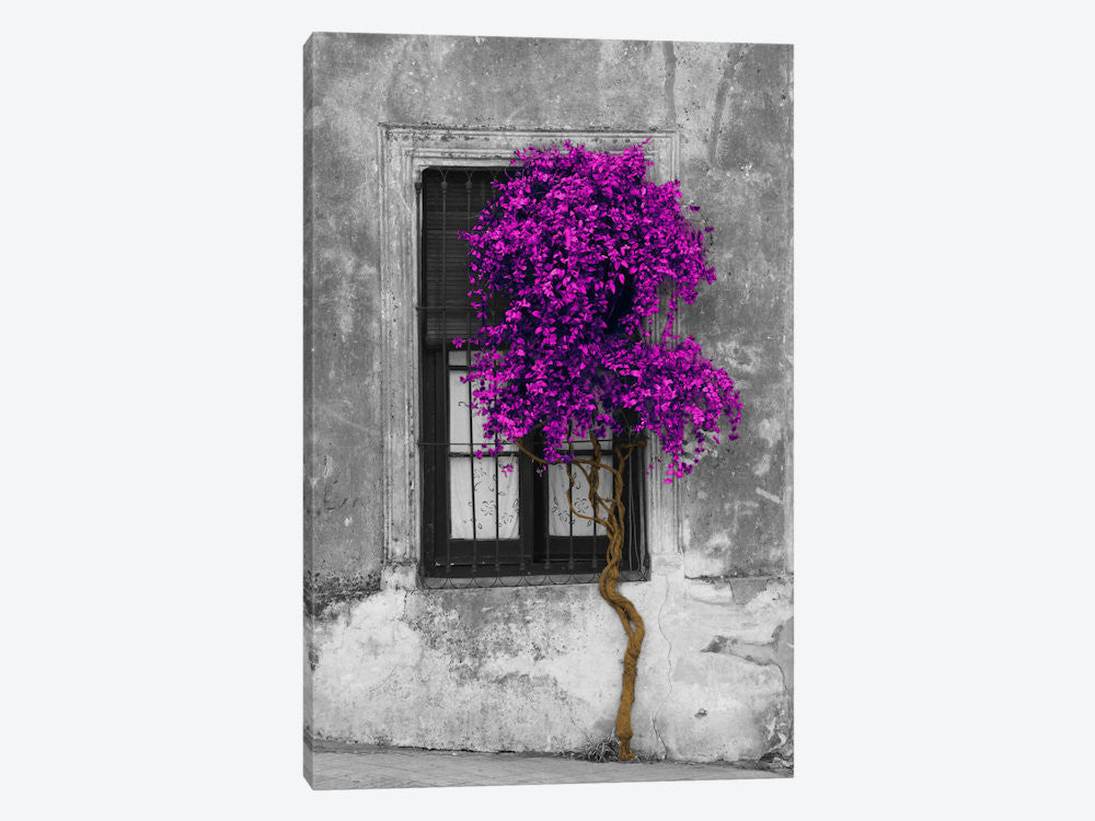 "Tree in Front of Window Purple Pop Color Pop by Panoramic Images Canvas Print 26"" L x 40"" H x 0.75"" D - eWallArt"