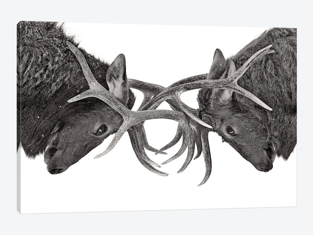 "Eye To Eye by Jim Cumming Canvas Print 40"" L x 26"" H x 0.75"" D - eWallArt"