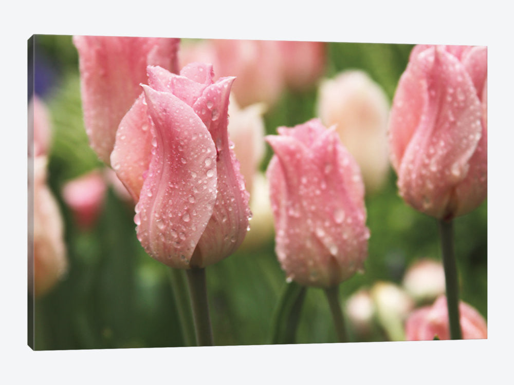 "Tulips after the Rain by Laura Marshall Canvas Print 26"" L x 18"" H x 0.75"" D - eWallArt"