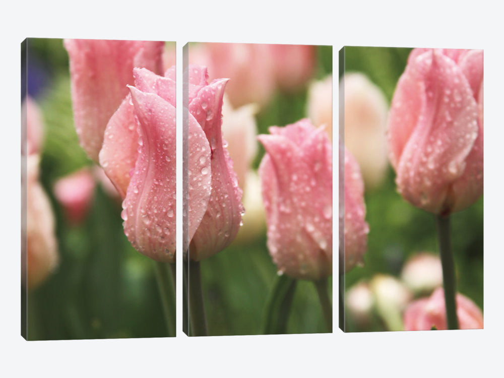 "Tulips after the Rain by Laura Marshall Canvas Print 60"" L x 40"" H x 0.75"" D - eWallArt"