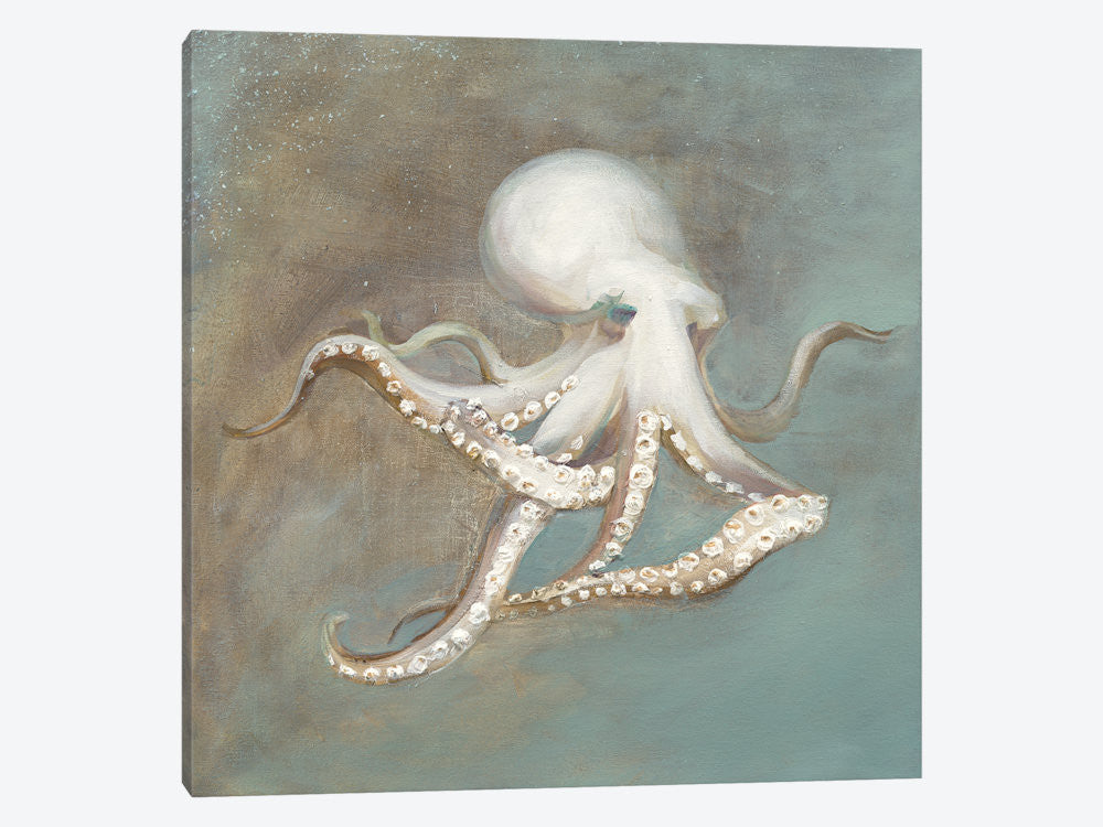 "Treasures from the Sea V by Danhui Nai Canvas Print 26"" L x 26"" H x 0.75"" D - eWallArt"