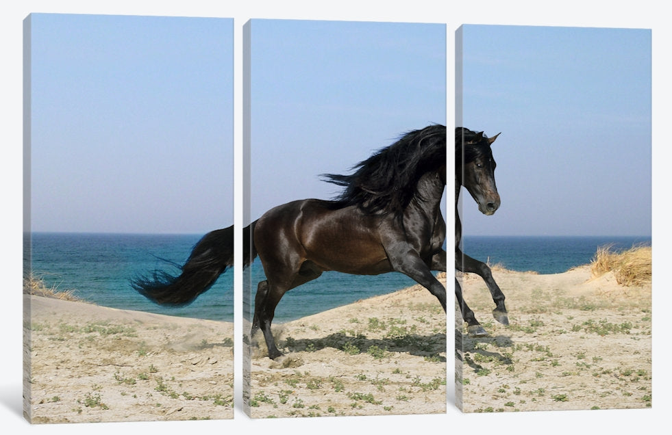 "Black Horse on The Beach - Canvas Print 60"" L x 40"" H x 0.75"" D"