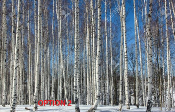 Custom Winter Aspen Trees Mural