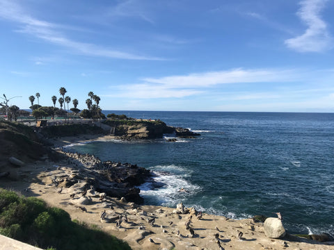 Holiday in La Jolla