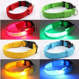 Dog Collar With LED Safety Light - Big Star Trading - 1