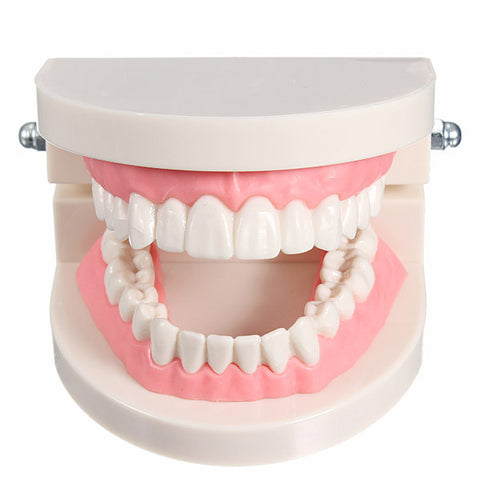 1 Pack Dental Dentist Teeth Tooth Teach Model Pink Flesh Gums - Shopping2all