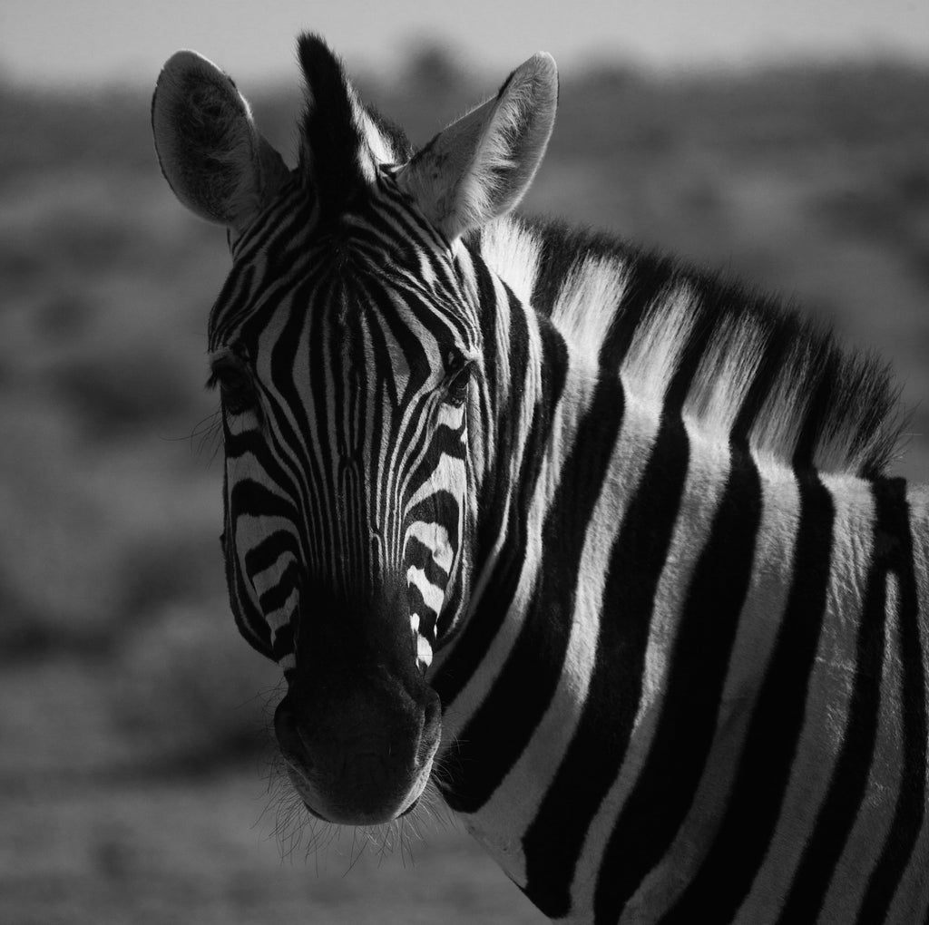 Get to Know Zebras on Their Special Day