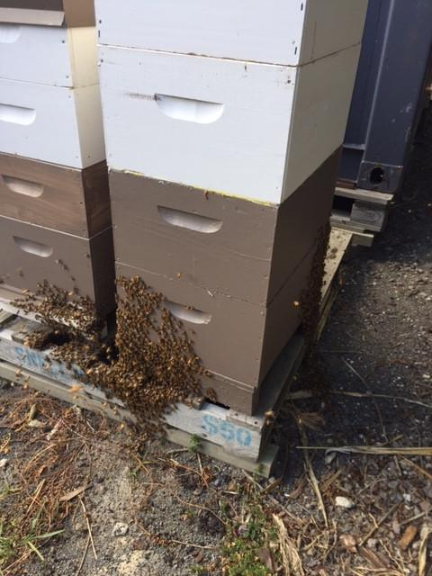 Honey - Honey | Manuka MultiFlora Raw Honey From The Bee Hive To The Honey Pot 250gm