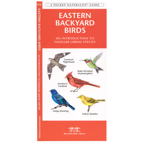 A Pocket Naturalist Guide to Eastern Backyard Birds