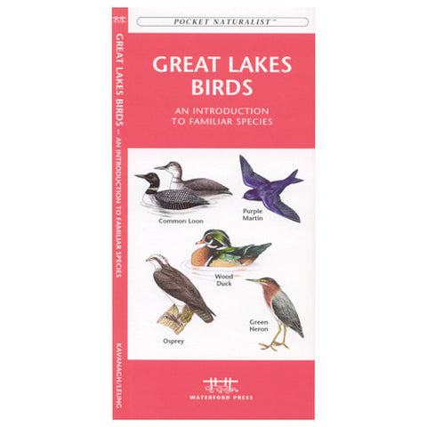 A Pocket Naturalist Guide to Great Lakes Birds
