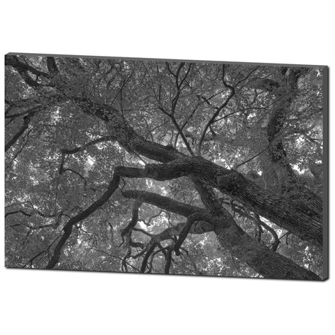 'Branching' Visual Art Canvas by Adrian Rodriguez - louisacatharinedesign