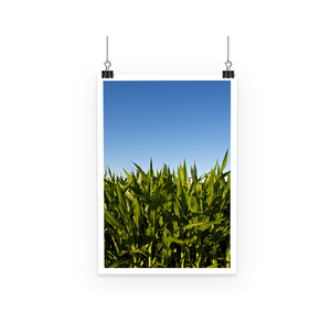 'Cornfield' Visual Art by Adrian Rodriguez Poster