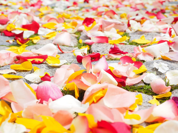 Natural Toner: Rose petals scattered on the ground