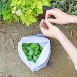 reusable produce bags in garden
