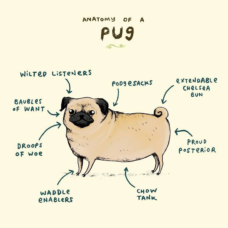 'Anatomy of a Pug' signed A4 print by Sophie Corrigan