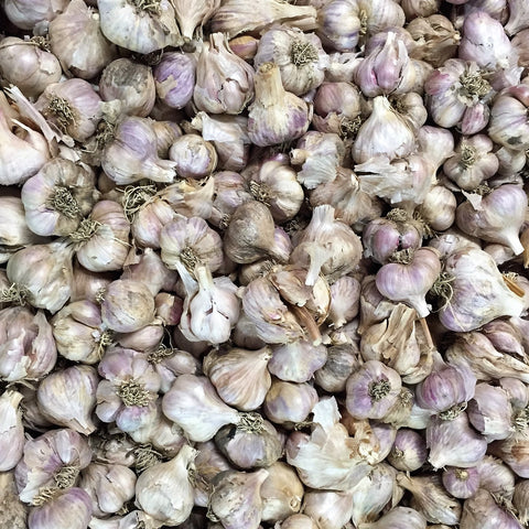 3kg BOX Organic Garlic