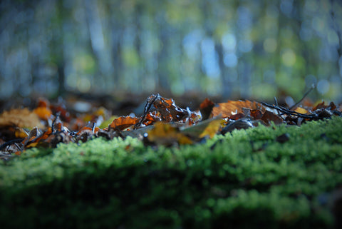 Autumn in Perry Wood