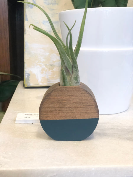 hand carved wood air plant holder