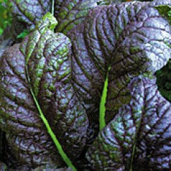 Mustard Spinach Red Giant - Certified Organic