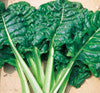Chard Swiss, Long White Ribbed