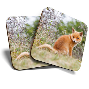 Great Coasters (Set of 2) Square / Glossy Quality Coasters / Tabletop Protection for Any Table Type - Ginger Baby Fox Cub Animal  #15612