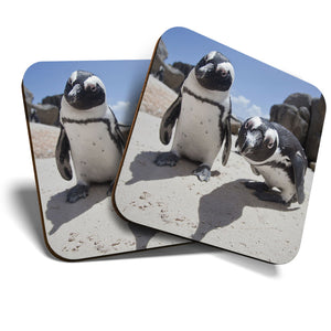 Great Coasters (Set of 2) Square / Glossy Quality Coasters / Tabletop Protection for Any Table Type - Boulders Beach African Penguins  #16261