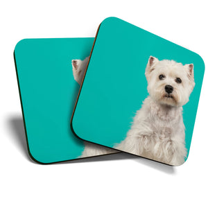 Great Coasters (Set of 2) Square / Glossy Quality Coasters / Tabletop Protection for Any Table Type - Cute West Highland Terrier Dog Westie Puppy  #24423