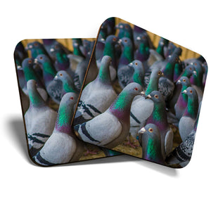 Great Coasters (Set of 2) Square / Glossy Quality Coasters / Tabletop Protection for Any Table Type - Flock of Grey Green Pigeon Birds   #24613