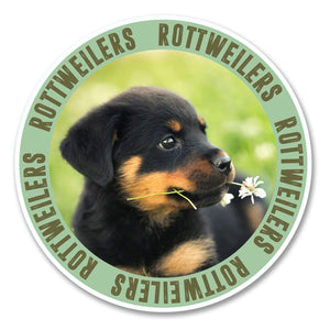 2 x Rottweiler Puppy Dog Vinyl Sticker #6145