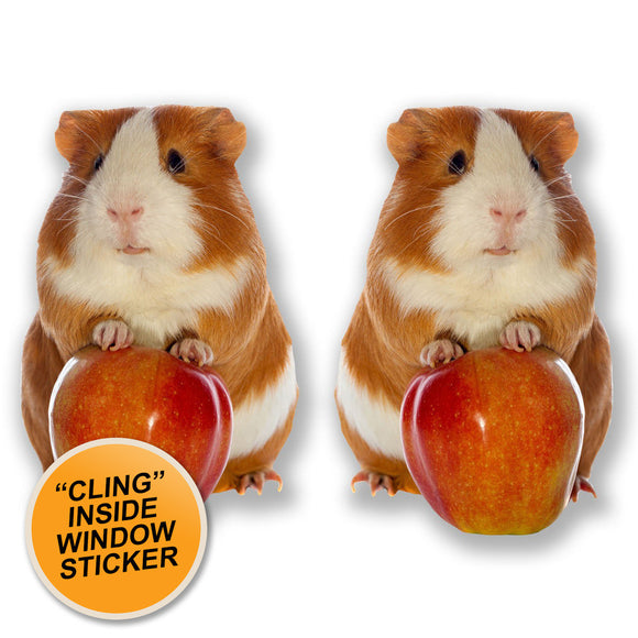 2 x Cute Ginger Guinea Pig WINDOW CLING STICKER Car Van Campervan Glass #6596