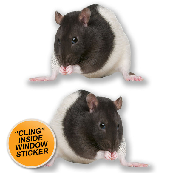 2 x Cute Fancy Rat WINDOW CLING STICKER Car Van Campervan Glass #6611