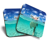 Great Coasters (Set of 2) Square / Glossy Quality Coasters / Tabletop Protection for Any Table Type - Swimming Pig Piglet Funny Animal  #8098