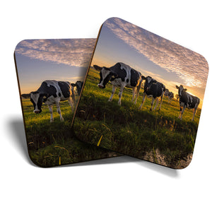 Great Coasters (Set of 2) Square / Glossy Quality Coasters / Tabletop Protection for Any Table Type - Dairy Cows Cattle Farm Farmer  #8119